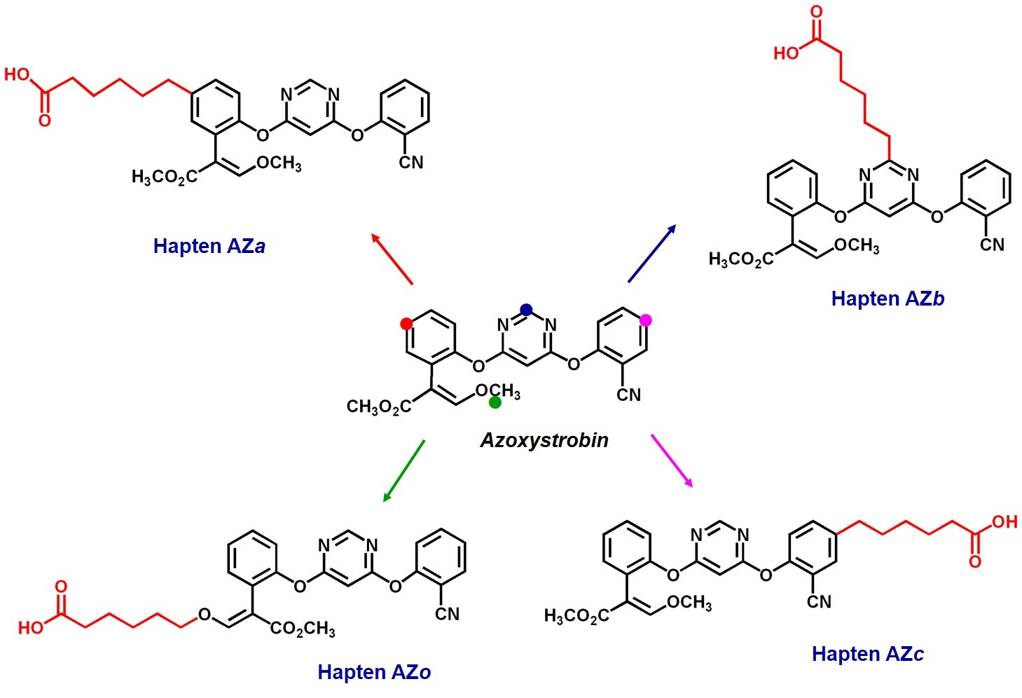 Design and synthesis of analyte haptens (azoxystrobin)