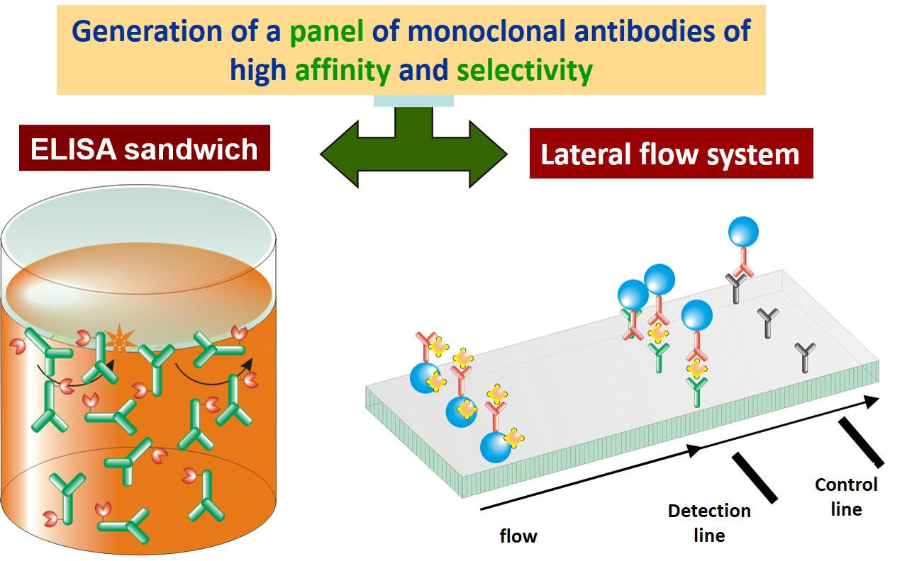 Development of immunoassays in microplate ELISA format and lateral flow systems